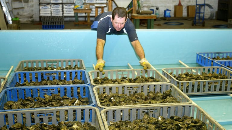 Acidifying oceans are affecting the shellfish industry.