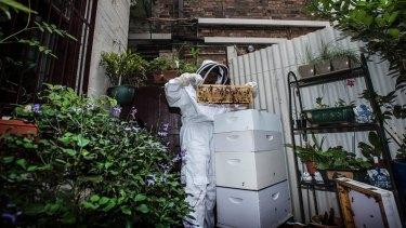 Sydney has seen a surge in urban beekeeping.
