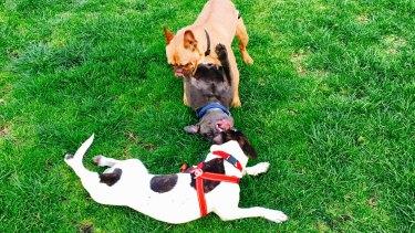 Off-leash dog beach rules are open to wide interpretation.