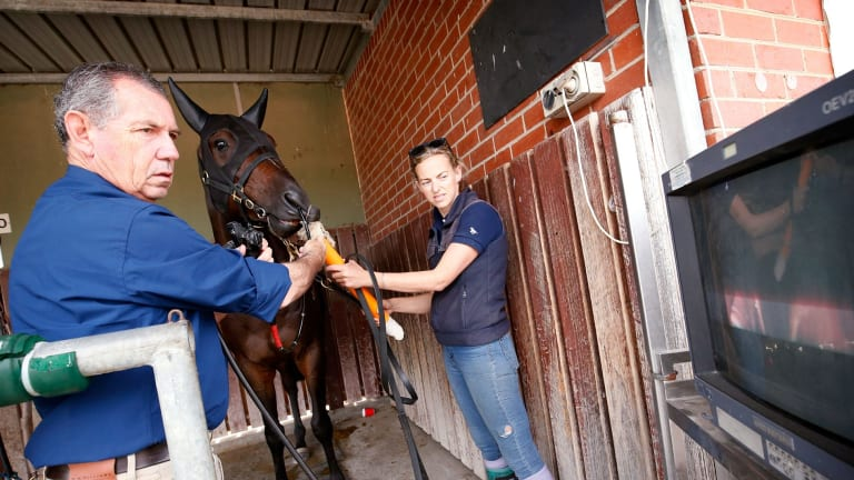 Equine veterinary surgeon Dr Glenn Robertson-Smith scopes the lungs of a racehorse at Cranbourne with the help of stablehand Michelle Jewell.
