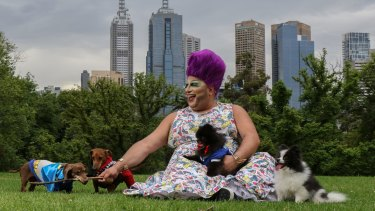 Frock Hudson is looking forward to Midsumma Carnival's dog show to show off daschunds Pablo (Joker) and Yves (Batman) and pomeranians, Hugo (black) and Bella.