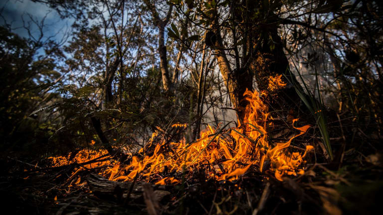 Falling moisture levels point to the prospect of an early and active fire season for many forests in NSW.