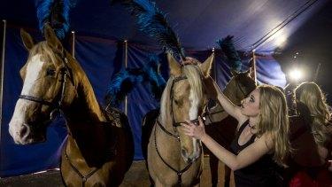 Kelly Maynard with palomino horses.