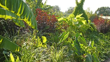 The edible beds are a tropical vegetaion wonderland.