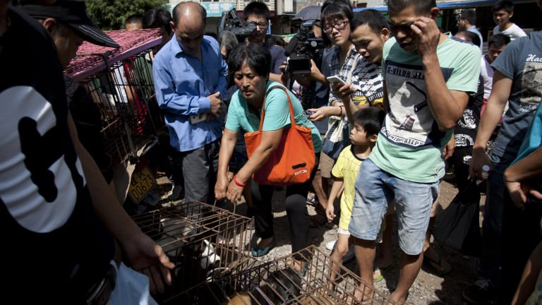 Yang Xiaoyun paid more than $1400 to rescue dogs in Yulin.