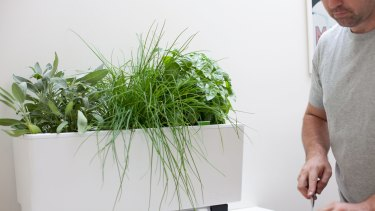 The mini Glowpear planter.