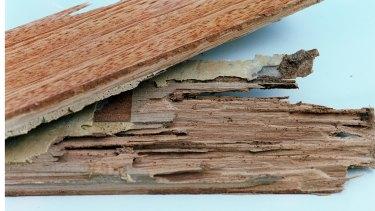 Termite damage to floorboards.
