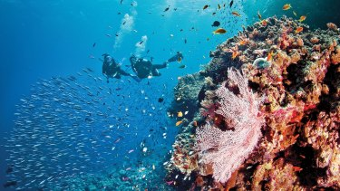 The tourist brochure version: scuba diving on the Great Barrier Reef