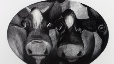 Cow portrait by William Robinson.