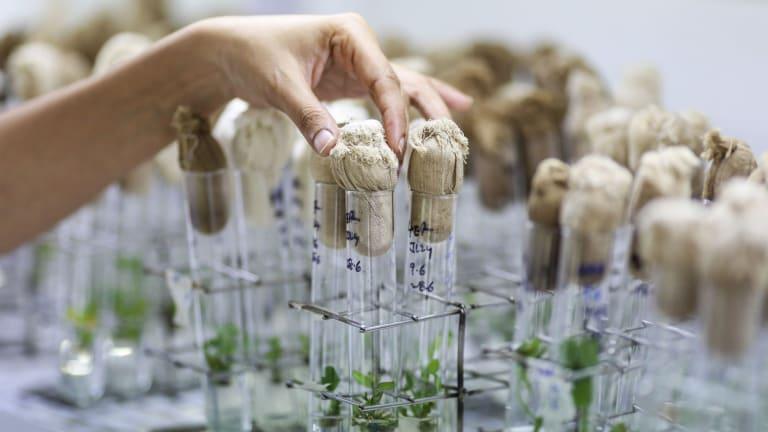 Monash University will open a Food Innovation Centre.