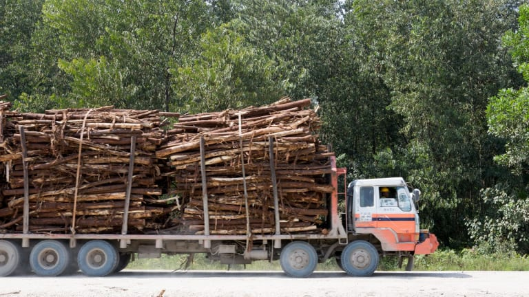 A truck carries tree logs inside APRIL's concession in Kerinci, Riau province.