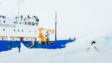 Blizzards and massive icebergs worsened the Akademik Shokalskiy's Antarctic plight.