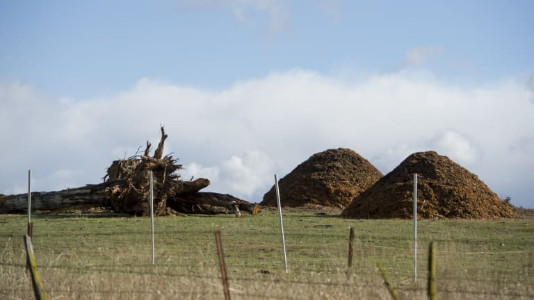 Woodchips on the site of the new solar farm on the Monaro Highway at Williamsdale on Friday.