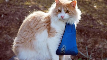An example of the cat bibs being introduced by Eurobodalla Council.