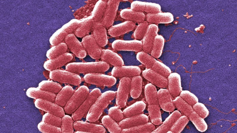 Antibiotics which kill useful bugs are giving cancer patients a kick