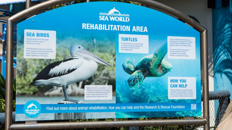 """Sea World has earned a reputation for its rescue and rehabilitation work and its funding of marine research, but critics say such projects are a """"fig leaf""""."""