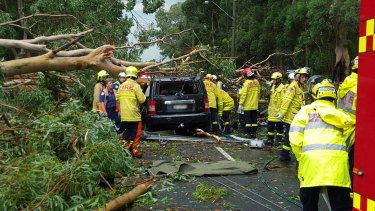 A man died when a falling tree crushed a car at Emu Plains.