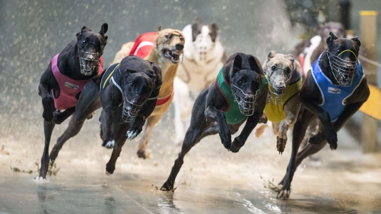 The government will spend $41 million to reform the greyhound industry.
