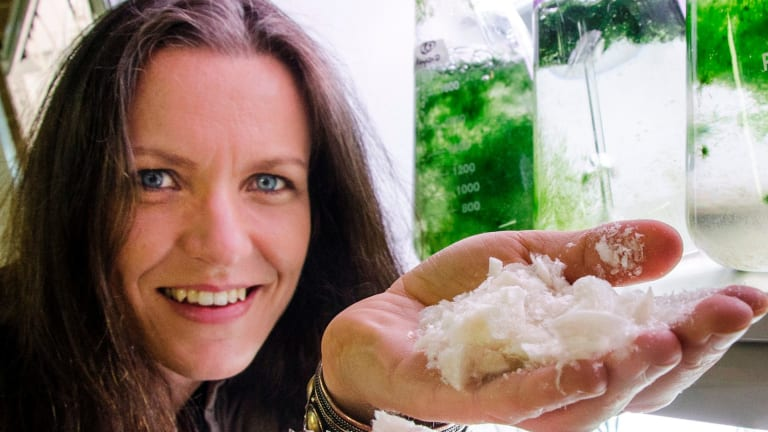 Marine ecologist and entrepreneur Dr Pia Winberg has a seaweed farm that produces foods and cosmetics.