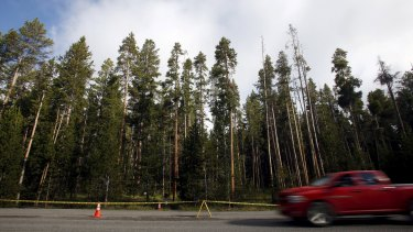 A park ranger found the hiker's body on Friday in a popular back-country area near the Elephant Back Loop Trail near Yellowstone Lake in the middle of the park.
