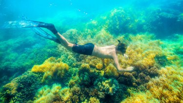 The image of the Great Barrier Reef that Australia likes to project.