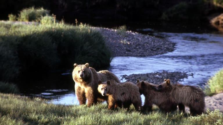 Bear shows claws: A Russian geopolitics analyst says Yellowstone National Park would be a good target for nuclear attack.