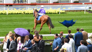 Wet and wild weather during Race 1 on Cox Plate Day at Moonee Valley Racecourse.