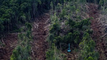 An aerial photo taken by Greenpeace shows a subsidiary firm of APRIL clearing peatland forests in May 2014 to make way for a pulp plantation on Indonesia's Padang Island.