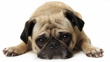 Pet care group Greencross has rejected another takeover bid.