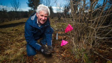 Wayne Haslam digging for a truffle.