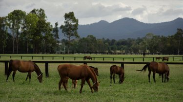 Two stud farms close to the proposed Drayton South -  now renamed Project Maxwell - coal mine in the Hunter Valley.