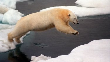 Leap of faith: Progress is needed in Lima climate talks.