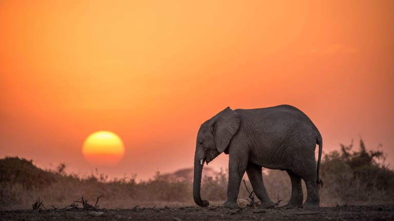 """In Kenya, a new anti-poaching offensive is """"blending counter-terrorism and counter-insurgency tactics"""" to protect elephants."""