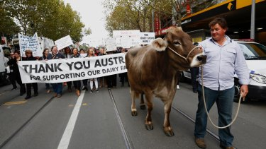 A dairty cow called Sary led the way as Victorian farmers marched from Federation Square to Parliament House.