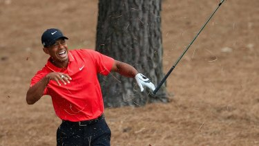 Sore one: Tiger Woods shows his discomfort after connecting with a tree root in the pine straw on the ninth.
