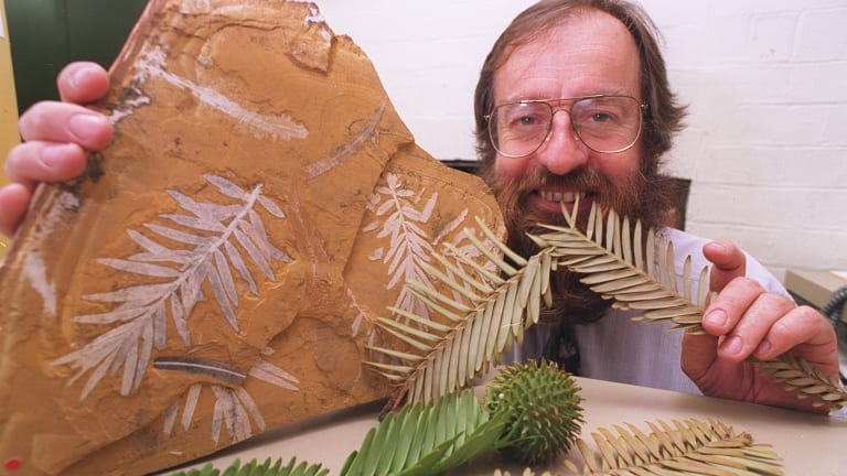 Ken Hill, a senior botanist at the Royal Botanic Gardens in 1994 with a 150-million-year-old Jurassic fossil of podozamites, the ancestor of the Wollemi pine.