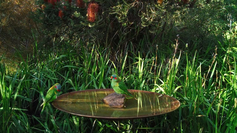 A copper birdbath is unhospitable for both mosquito larvae and algae.