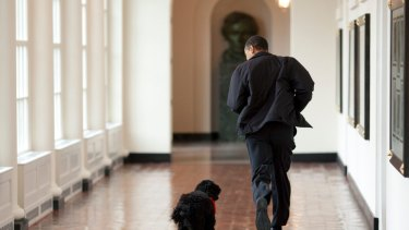 President Obama welcoming the family's new puppy Bo, at the White House in 2009.