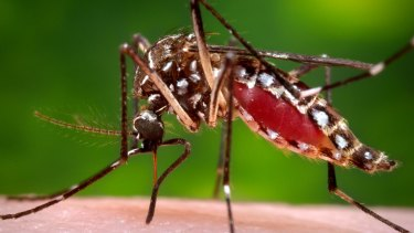 Most cases of the mosquito-borne Ross River virus are believed to have been acquired in regional Victoria.