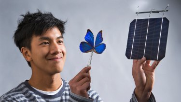 Co-researcher Kevin Le from ANU with a blue Morpho butterfly and a solar cell.