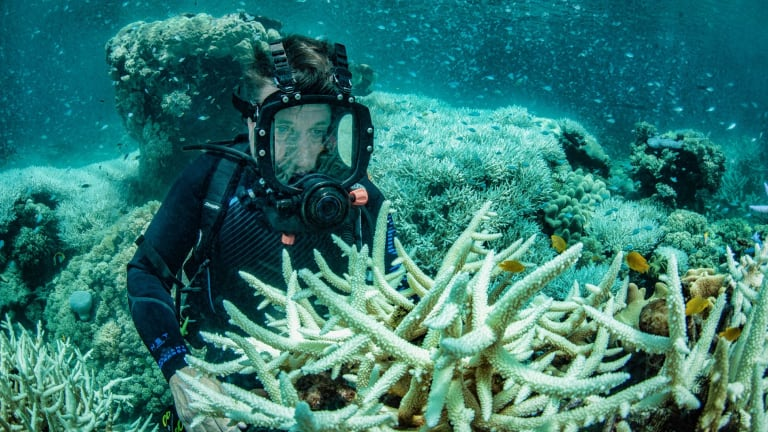 Richard Fitzpatrick inspects recent bleaching of coral in the Great Barrier Reef at Vlasoff Reef near Cairns. About half the corals have died in the past two years.