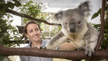 Bridie has been working to increase the genetic pool of koalas in south-east Queensland to help them populate.
