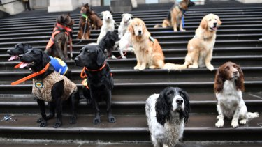 Dogs turned up on the steps of State Parliamnet during the campaign to ban puppy farms.