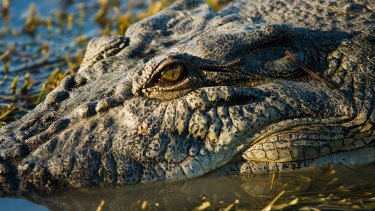 Katter's Australian Party could block the budget unless the Queensland government comes to the table on crocodile culling.