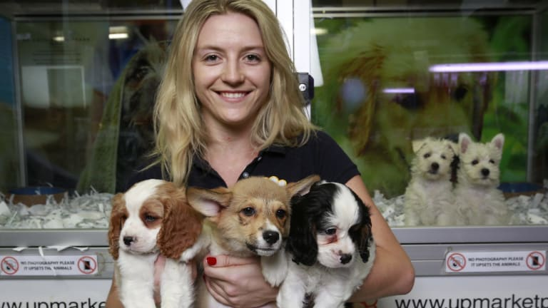 Teigan Cloke of Upmarket Pets has her arms full with a trio of pups.
