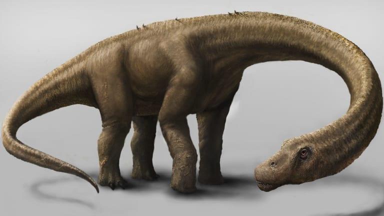 Dreadnoughtus schrani.
