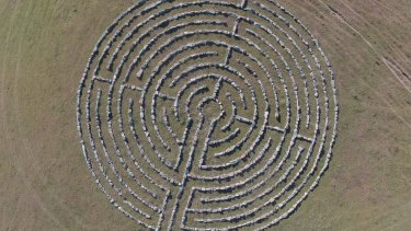 The 21 metre stone labyrinth at Old Graham as viewed from a drone.