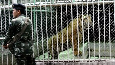 A policeman stands outside a tiger cage at a property raide by Thai police in Saiyok on Tuesday.