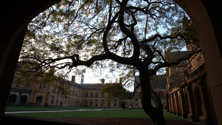The jacaranda in the main quadrangle at Sydney University was planted 88 years ago..
