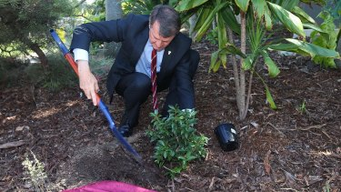 Lord Mayor Graham Quirk planted the tree as part of the first memorial to those who have died from domestic violence attacks.